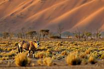 Colors of Namibia